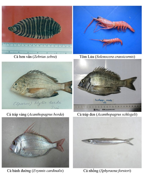 Điểm danh 154 loại hải sản miền Trung chưa được ăn ảnh 2