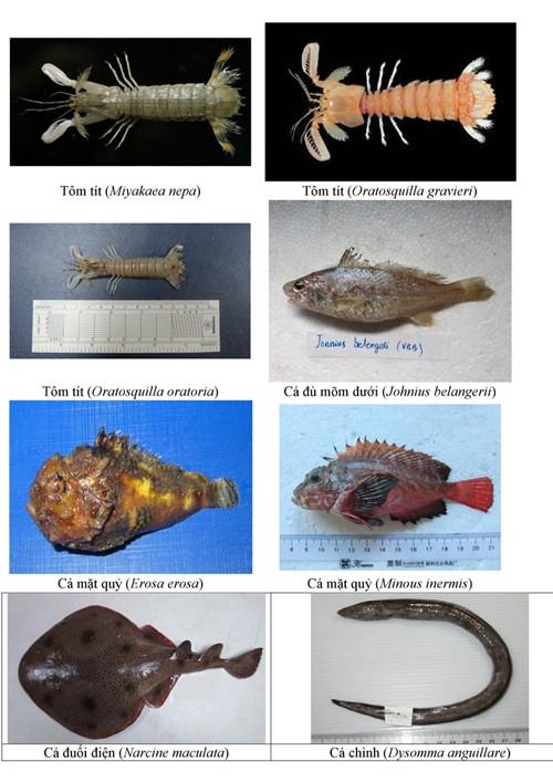 Điểm danh 154 loại hải sản miền Trung chưa được ăn ảnh 9