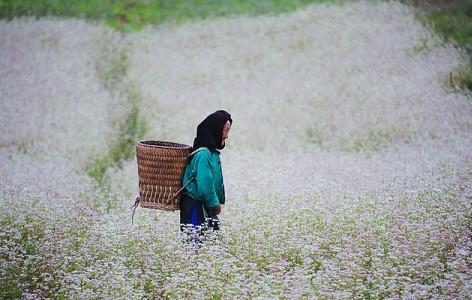 7 thiên đường ẩn mình chờ khám phá ở Việt Nam ảnh 2