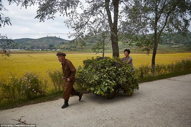 """""""Vén màn"""" cuộc sống của giới tinh hoa Triều Tiên (video) ảnh 18"""