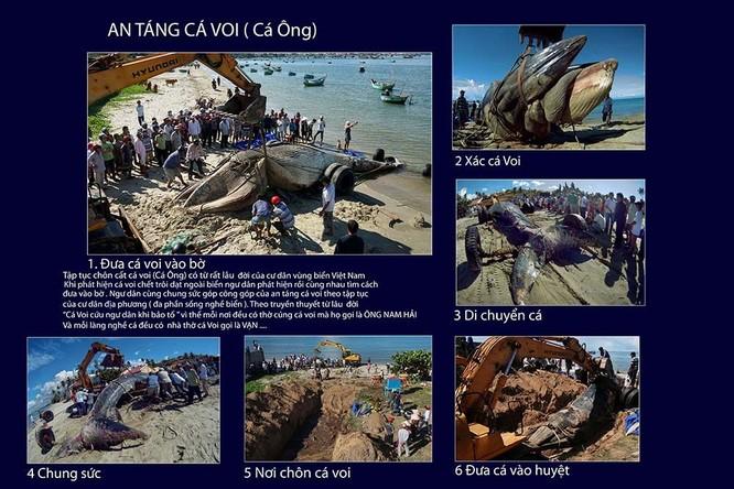 """Tác phẩm """"An táng cá voi"""" của tác giả Đỗ Hữu Tuấn"""