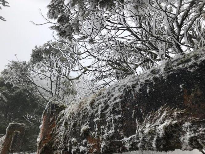 Video: Tuyết rơi dày phủ trắng Sapa ảnh 4