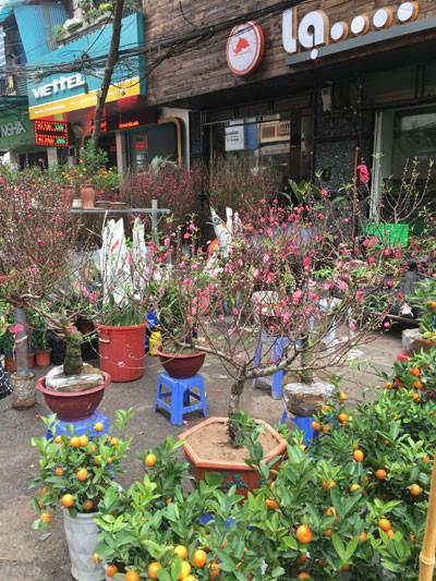 Chợ hoa Hàng Lược nhộn nhịp những ngày cuối năm ảnh 9