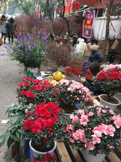 Chợ hoa Hàng Lược nhộn nhịp những ngày cuối năm ảnh 11