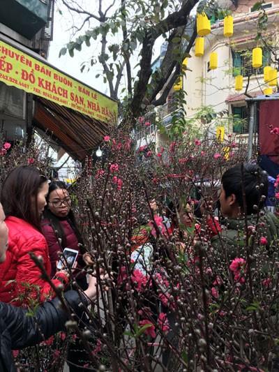 Chợ hoa Hàng Lược nhộn nhịp những ngày cuối năm ảnh 6