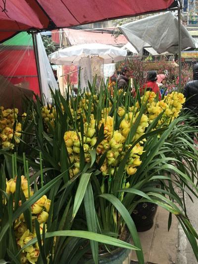 Chợ hoa Hàng Lược nhộn nhịp những ngày cuối năm ảnh 7