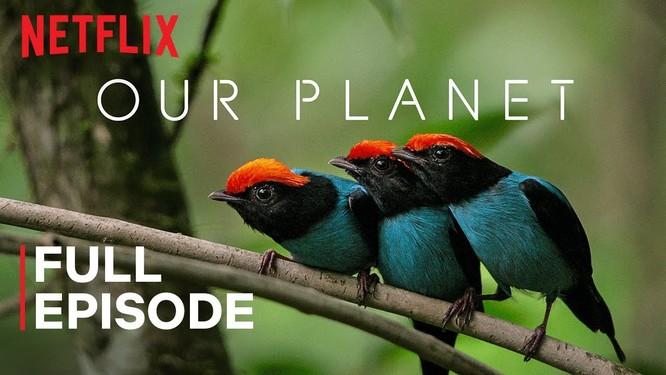 Netflix miễn phí 10 phim tài liệu phục vụ học tập mùa dịch COVID-19 ảnh 7