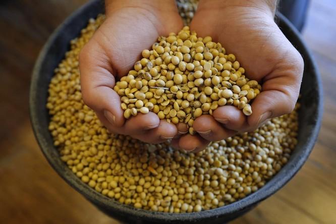 Một nông hộ ở Iowa cầm trên tay một nắm đậu nành, mặt hàng nông sản chịu ảnh hưởng nặng nhất từ cuộc chiến thương mại (Ảnh: AP)