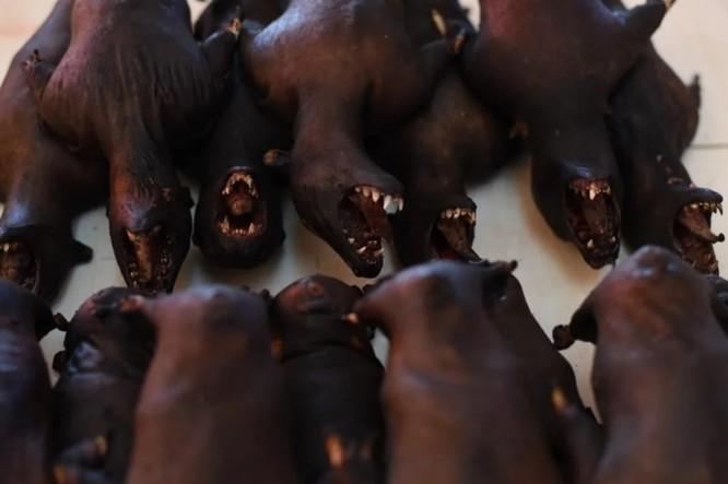 Thịt dơi là một món ăn khoái khẩu với cộng đồng người dân địa phương ở Tomohon (Ảnh: YAKI)