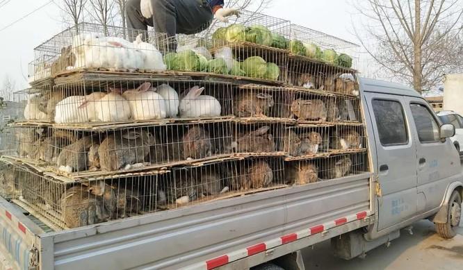 Quy định mới của Thâm Quyến vẫn cho phép người dân ăn thịt thỏ (Ảnh: SCMP)