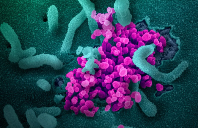 Một quan chức cho rằng các bên thù địch có thể không cần chỉnh sửa virus corona chủng mới, bởi điều đó để lại dấu vết (Ảnh: EPA)