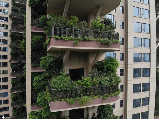 Cây được trồng rất nhiều ở ban công mỗi căn hộ (Ảnh: OC)