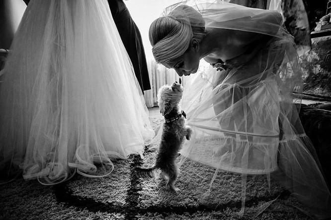 Khi cô dâu và chú rể bị 'cướp' vai chính trong ảnh cưới ảnh 16