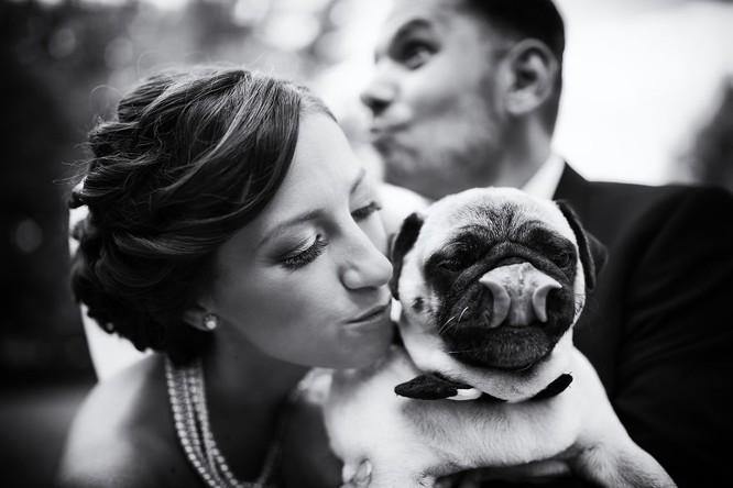 Khi cô dâu và chú rể bị 'cướp' vai chính trong ảnh cưới ảnh 17