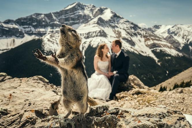 Khi cô dâu và chú rể bị 'cướp' vai chính trong ảnh cưới ảnh 1