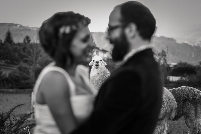 Khi cô dâu và chú rể bị 'cướp' vai chính trong ảnh cưới ảnh 3