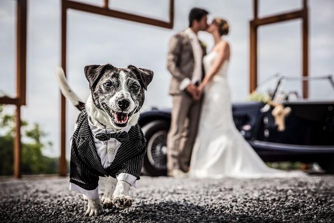 Khi cô dâu và chú rể bị 'cướp' vai chính trong ảnh cưới ảnh 4