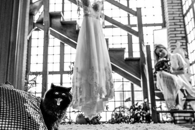 Khi cô dâu và chú rể bị 'cướp' vai chính trong ảnh cưới ảnh 7