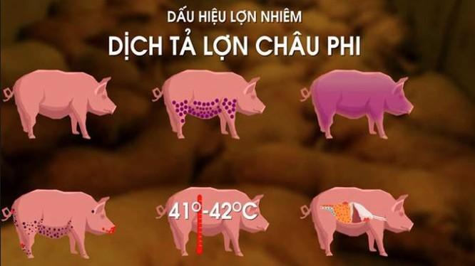 Dịch tả lợn châu Phi là gì, ăn thịt lợn mắc dịch tả châu Phi gây bệnh gì? ảnh 1