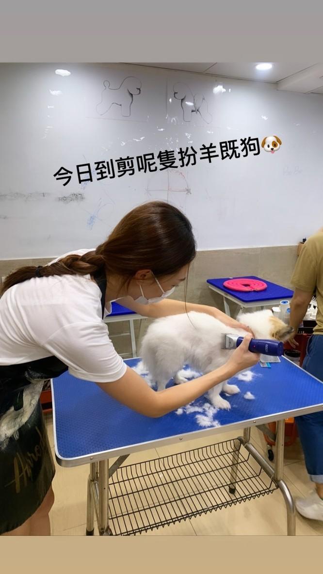 Bức ảnh hoa hậu Hoàng Gia Văn đang làm công việc tỉa lông cho thú cưng. Ảnh: HK01.