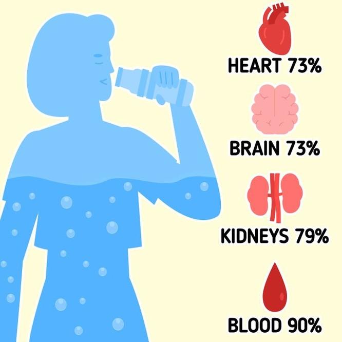 Làm thế nào để tính toán lượng nước cần thiết nạp vào cơ thể mỗi ngày? ảnh 1