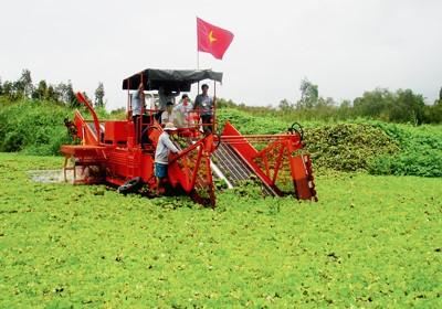 Thử nghiệm cắt lục bình tại U Minh Hạ