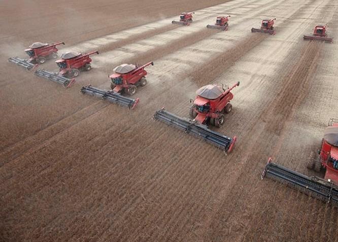"""Đậu hạt đang trở thành """"chiến trường nóng"""" của cuộc chiến mậu dịch Mỹ - Trung ảnh 5"""