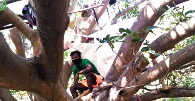 Tự cách ly ... trên cây để chống covid-19 của người Ấn Độ ảnh 1