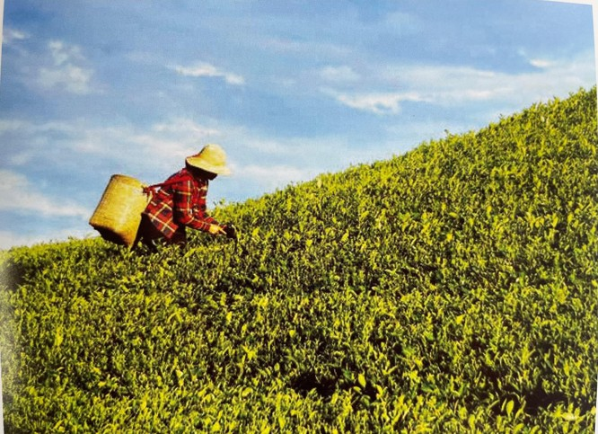 """""""Văn hóa trà Việt""""- hành trình giác ngộ và tìm về bản thể ảnh 1"""