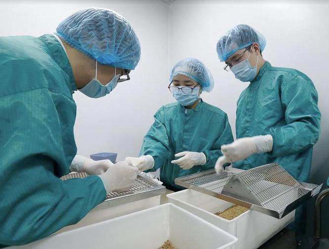 Bao giờ thì Việt Nam sẽ sản xuất được vaccine phòng COVID-19? ảnh 2