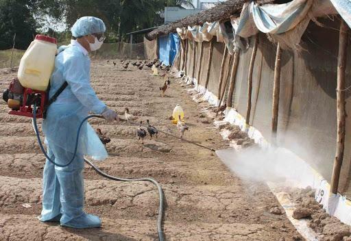 Nóng: WHO, FAO cảnh báo Việt Nam về virus cúm A (H5N8) lần đầu tiên lây từ gia cầm sang người ảnh 2