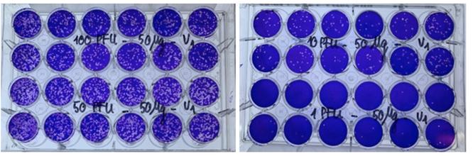 Lần đầu tiên Việt Nam nghiên cứu tiền lâm sàng thành công thuốc điều trị COVID-19 làm từ thảo dược ảnh 3