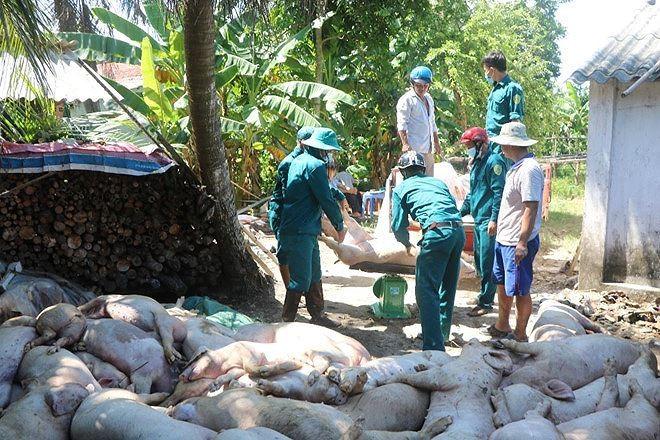 Việt Nam sẽ sản xuất vaccine dịch tả lợn châu Phi ảnh 1