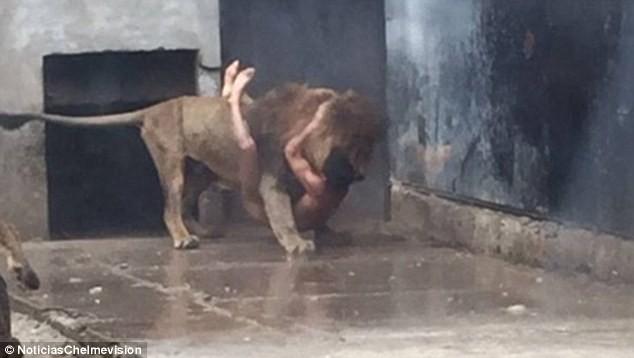 Nhảy vào chuồng Chúa Sơn Lâm để tự tử, người không chết nhưng sư tử chết ảnh 1