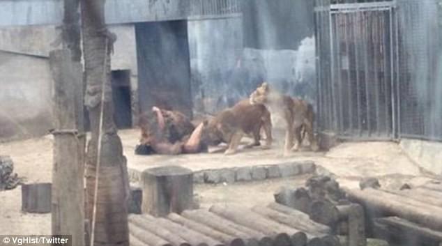 Nhảy vào chuồng Chúa Sơn Lâm để tự tử, người không chết nhưng sư tử chết ảnh 2