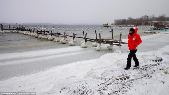 Tuyết rơi trắng trời ở thủ đô Sofia, Bulgary