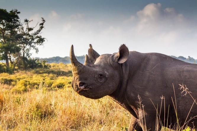 Công nghệ hiện đại giúp hồi sinh đười ươi và tê giác đen? ảnh 2