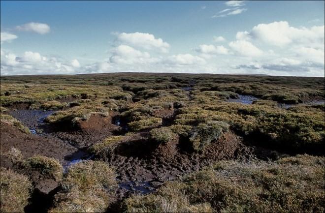 """Đầm lầy than bùn là """"kẻ phá hoại"""" hay cứu nguy thế giới khỏi sự nóng lên của khí hậu? ảnh 1"""