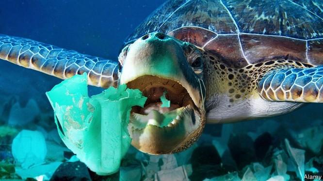 """Đại dương """"ngập"""" trong rác khẩu trang, găng tay y tế vì dịch COVID-19 ảnh 1"""