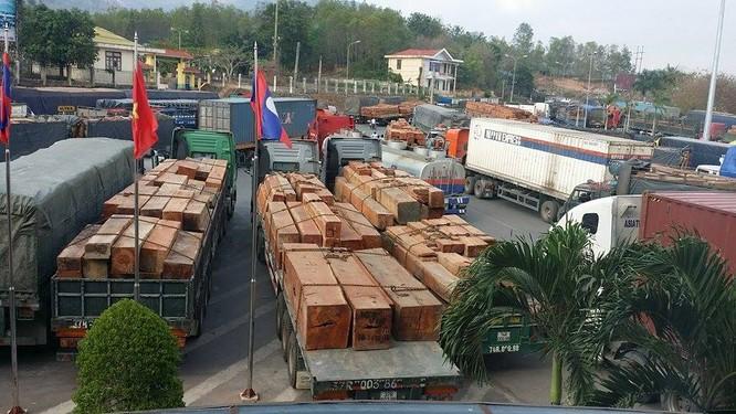 Hàng trăm xe gỗ ùn ứ ở Cửa khẩu Quốc tế Lao Bảo ảnh 1