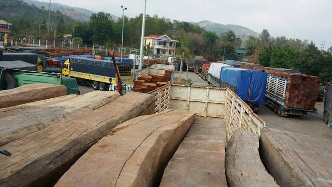 Hàng trăm xe gỗ ùn ứ ở Cửa khẩu Quốc tế Lao Bảo ảnh 2