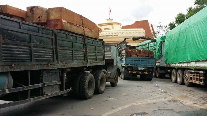 Hàng trăm xe gỗ ùn ứ ở Cửa khẩu Quốc tế Lao Bảo ảnh 4