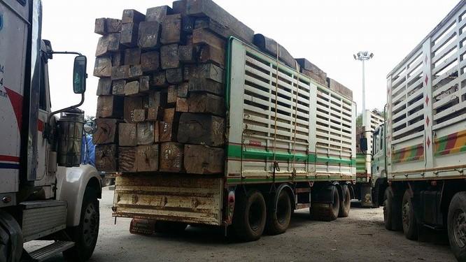 Hàng trăm xe gỗ ùn ứ ở Cửa khẩu Quốc tế Lao Bảo ảnh 12