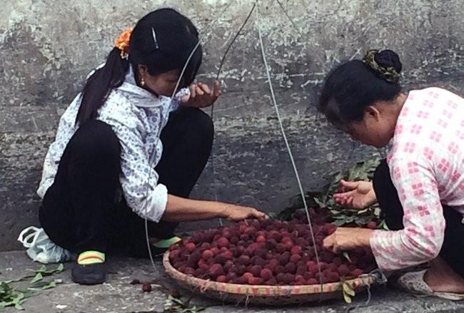 Tuy nhiên, ra khỏi cổng chợ, thanh mai Tàu được hô biến thành thanh mai Quảng Ninh, Lào Cai và bán với giá từ 100.000-150.000 đồng/kg.