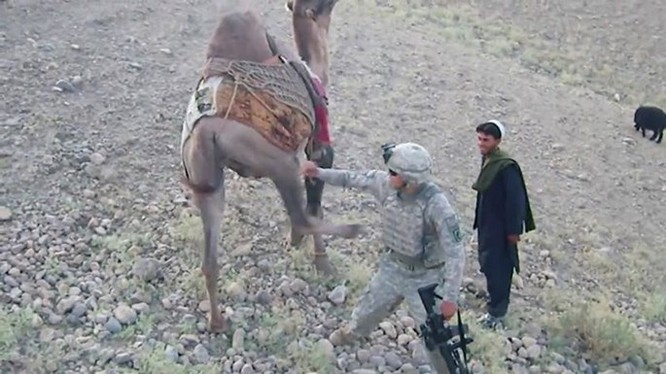 Lạc đà Afghanistan đá lính Mỹ té nhào ảnh 1