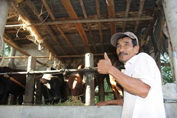 Ở nơi hàng ngàn con bò được đóng bảo hiểm ảnh 2