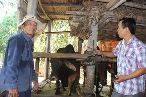 Ở nơi hàng ngàn con bò được đóng bảo hiểm ảnh 3