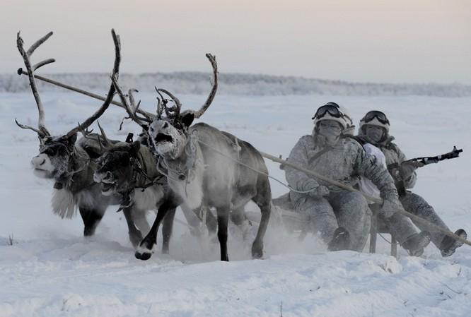 Clip tuần lộc và chó kéo xe tham gia huấn luyện tác chiến của Nga ảnh 4