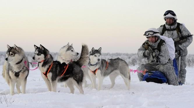 Clip tuần lộc và chó kéo xe tham gia huấn luyện tác chiến của Nga ảnh 6