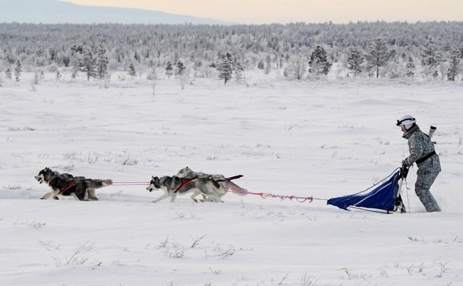 Clip tuần lộc và chó kéo xe tham gia huấn luyện tác chiến của Nga ảnh 7